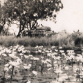 Billabong, wet season, c1933.