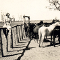 ED at horse yard, Ivanhoe, early 1930s.
